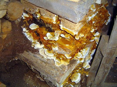 Dry rot treatment